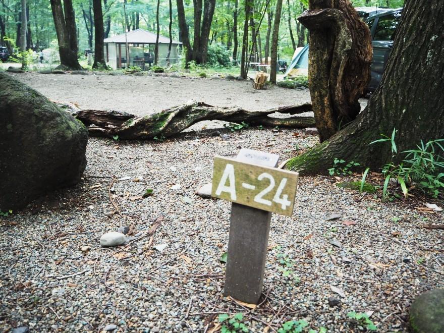 A24サイト