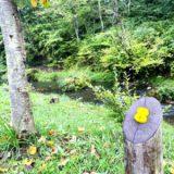 軽井沢キャンプゴールドのA8サイト